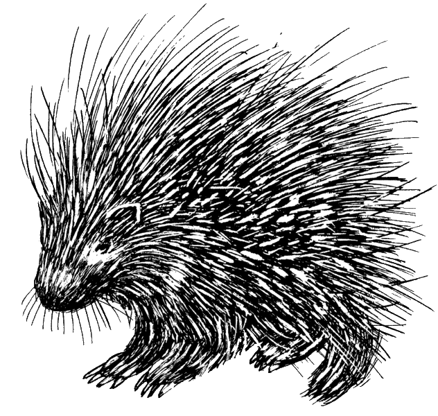 632px-Porcupine_(PSF)
